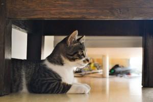 stange cat behaviour