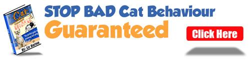 stop-bad-cat-behaviour