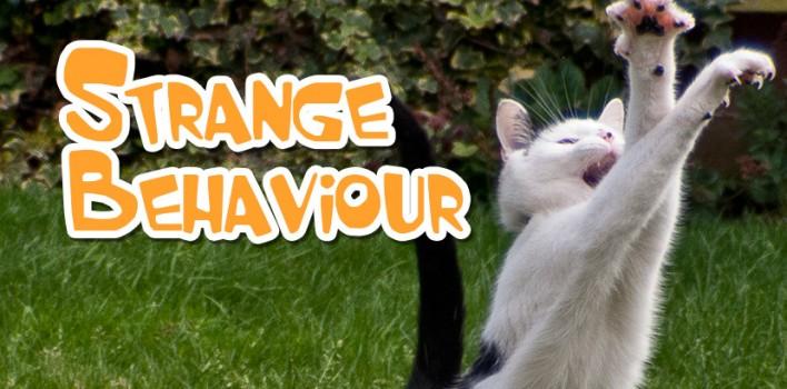 Strange Cat Behaviour – Our Top 6